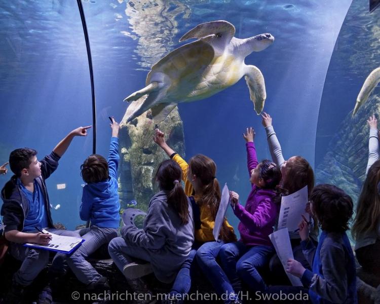 Sea Life - Fischinventur 0480