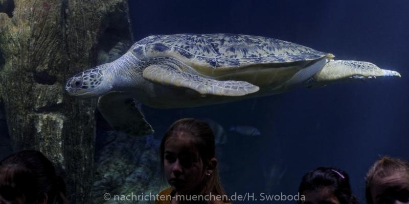Sea Life - Fischinventur 0500