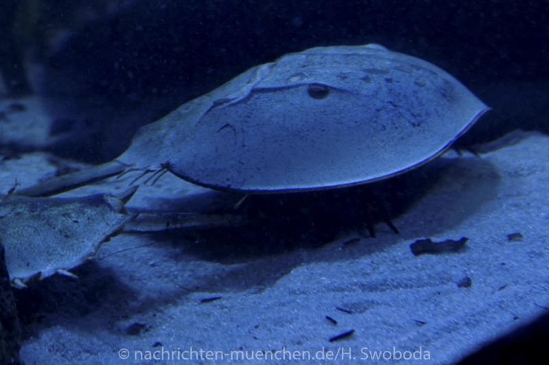 Sea Life - Fischinventur 0540