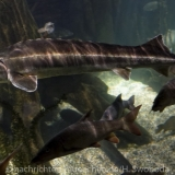 Sea Life - Fischinventur 0090