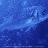 Sea Life - Fischinventur 0110