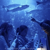 Sea Life - Fischinventur 0120