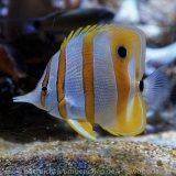 Sea Life - Fischinventur 0140