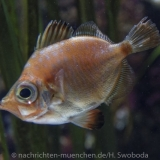 Sea Life - Fischinventur 0180