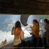 Sea Life - Fischinventur 0190
