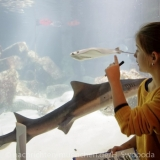 Sea Life - Fischinventur 0240