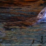 Sea Life - Fischinventur 0260