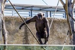 Tierpark-Hellabrunn-2019-13-von-105