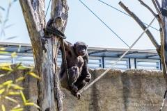 Tierpark-Hellabrunn-2019-14-von-105