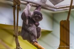 Tierpark-Hellabrunn-2019-15-von-105