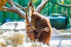 Tierpark-Hellabrunn-2019-17-von-105