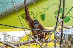Tierpark-Hellabrunn-2019-18-von-105