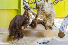 Tierpark-Hellabrunn-2019-19-von-105
