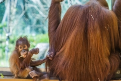 Tierpark-Hellabrunn-2019-20-von-105