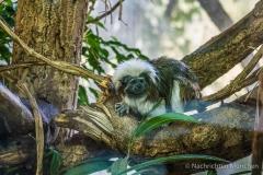 Tierpark-Hellabrunn-2019-22-von-105