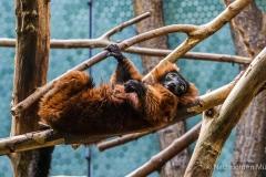 Tierpark-Hellabrunn-2019-24-von-105