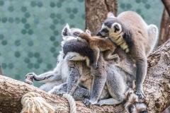 Tierpark-Hellabrunn-2019-26-von-105