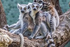 Tierpark-Hellabrunn-2019-29-von-105