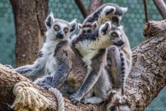 Tierpark-Hellabrunn-2019-30-von-105