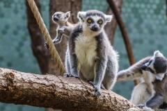Tierpark-Hellabrunn-2019-32-von-105