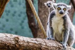 Tierpark-Hellabrunn-2019-33-von-105