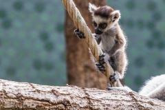 Tierpark-Hellabrunn-2019-34-von-105