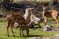 Tierpark-Hellabrunn-2019-39-von-105