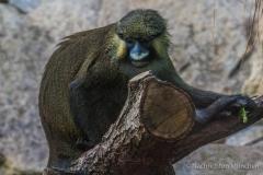 Tierpark-Hellabrunn-2019-4-von-105