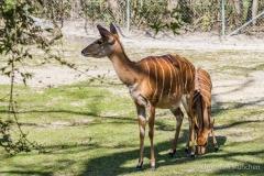 Tierpark-Hellabrunn-2019-40-von-105