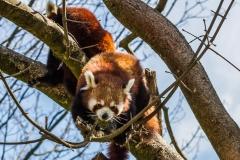 Tierpark-Hellabrunn-2019-42-von-105