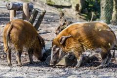 Tierpark-Hellabrunn-2019-43-von-105