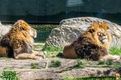 Tierpark-Hellabrunn-2019-44-von-105