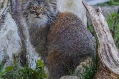 Tierpark-Hellabrunn-2019-48-von-105