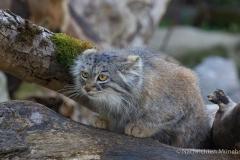 Tierpark-Hellabrunn-2019-49-von-105