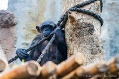 Tierpark-Hellabrunn-2019-7-von-105