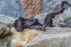 Tierpark-Hellabrunn-2019-8-von-105