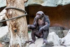 Tierpark-Hellabrunn-2019-9-von-105