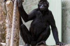 Tierpark Hellabrunn: Fertigstellung des Hauses der kleinen Affen