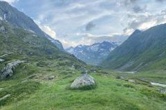 Hellabrunner-Alpensteinboecke-erfolgreich-ausgewildert-1-von-12