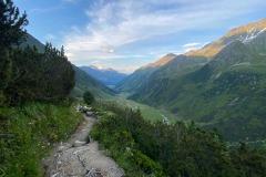 Hellabrunner-Alpensteinboecke-erfolgreich-ausgewildert-2-von-12