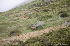 Hellabrunner-Alpensteinboecke-erfolgreich-ausgewildert-9-von-12