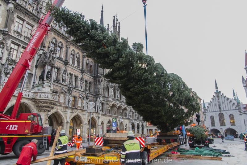 Münchner Christbaum 2016