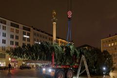Der-Muenchner-Christbaum-2020-13-von-27