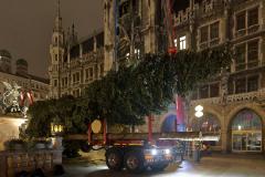 Der-Muenchner-Christbaum-2020-14-von-27