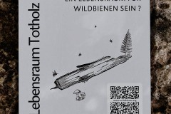 neuer-wildbienenlehrpfad-im-englischen-garten-0020