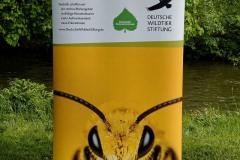 neuer-wildbienenlehrpfad-im-englischen-garten-0050