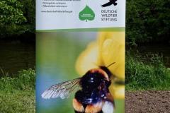 neuer-wildbienenlehrpfad-im-englischen-garten-0060