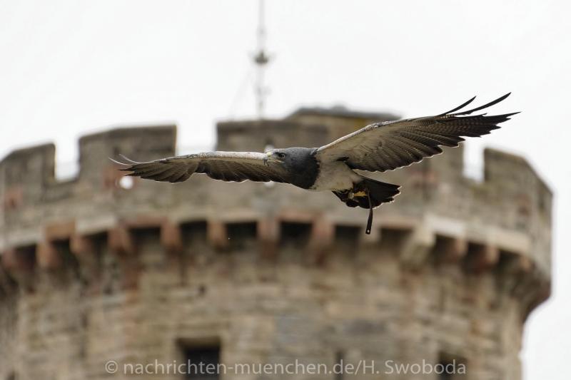 Pressereise - Birmingham - Warwick Castle 0720