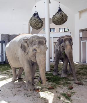Blick in das neue Elefantenhaus