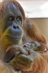 © Tierpark Hellabrunn/Susanne Bihler